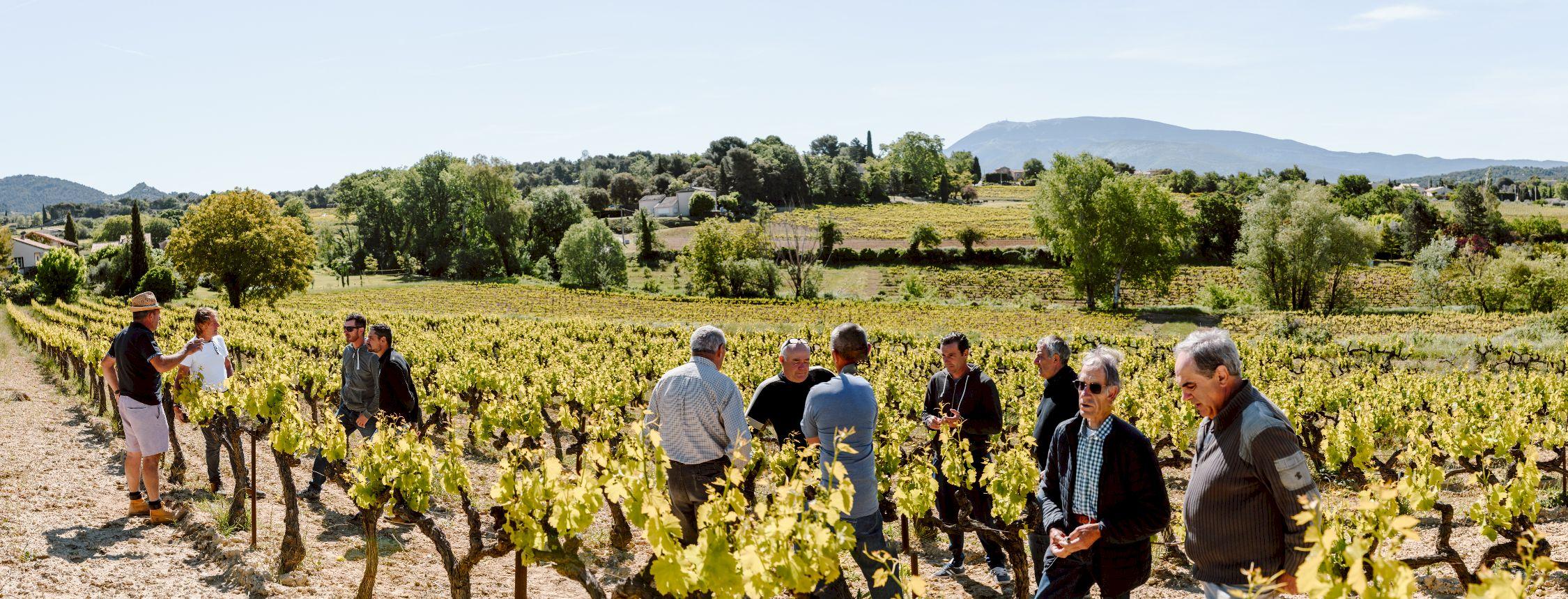 photo panoramique hommes dans champs de vigne