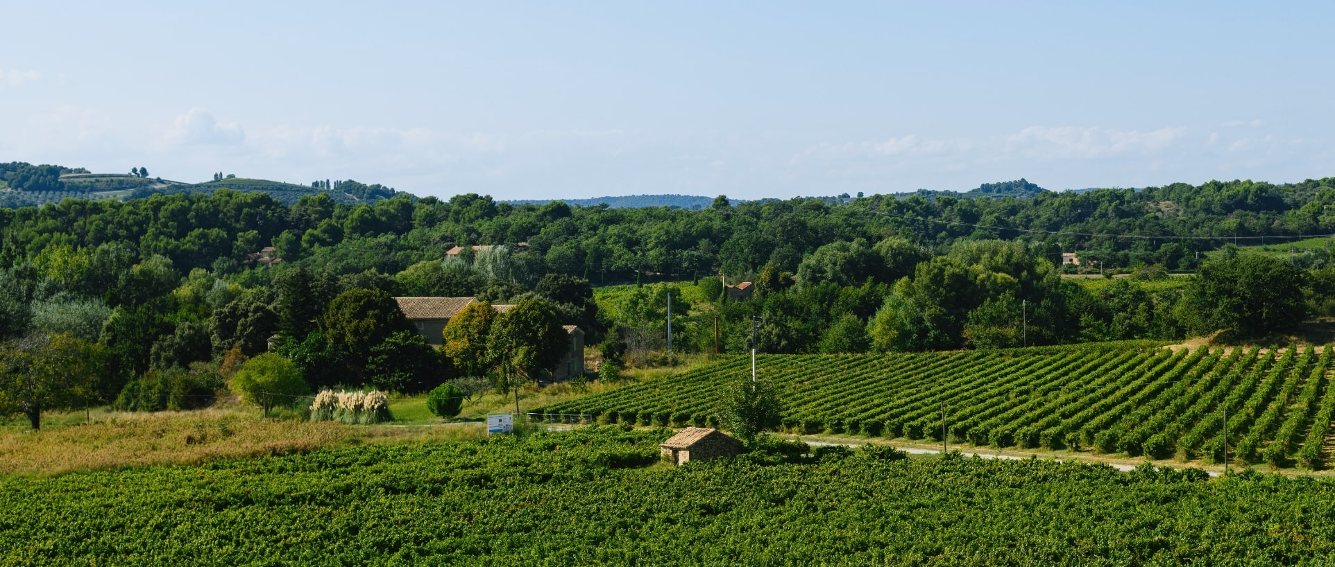 Photo panorama Champs de vigne