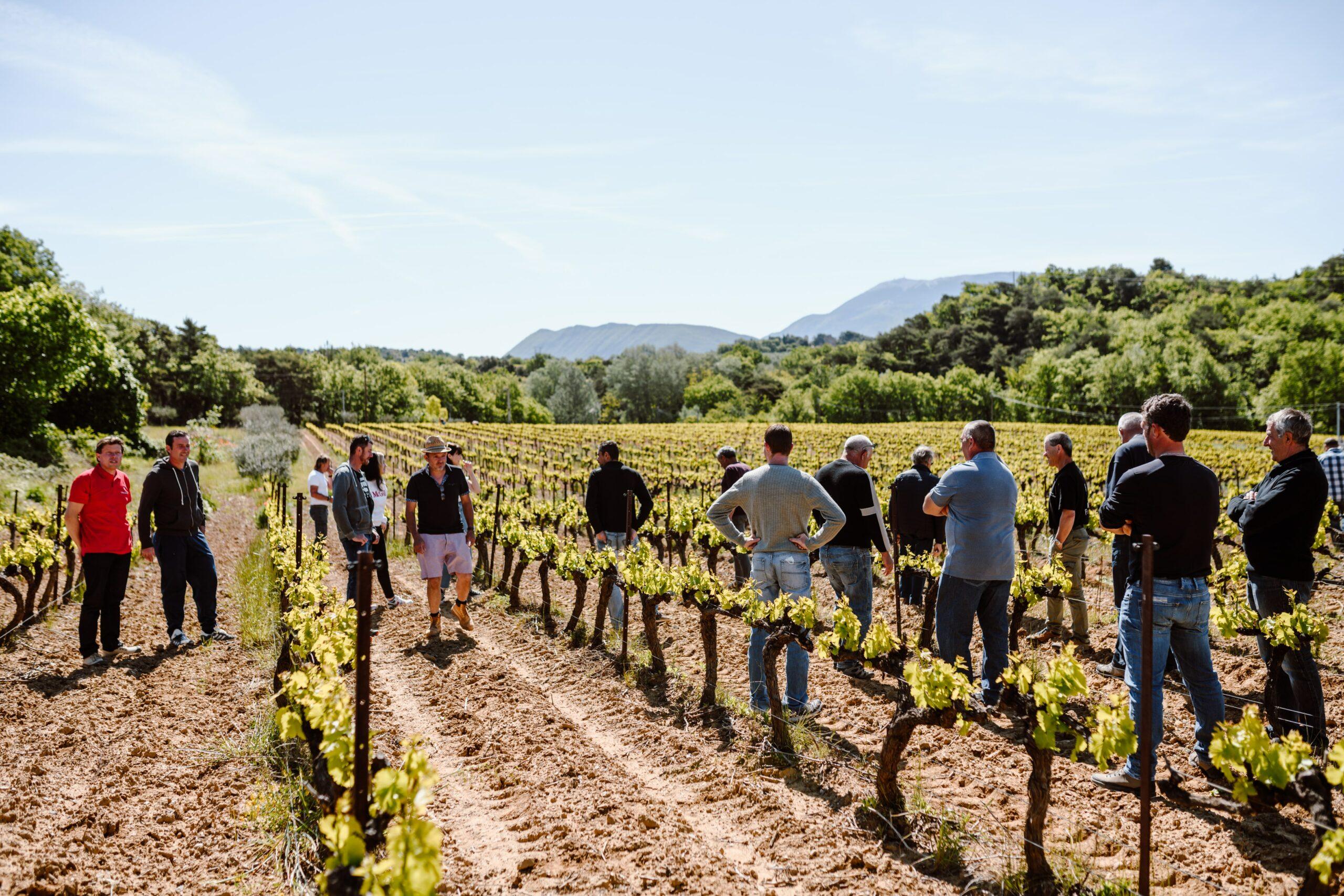 photo équipe de vignerons dans les vignes